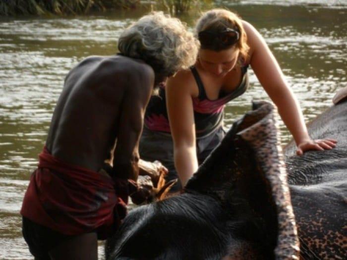 Wild Elephant Experience