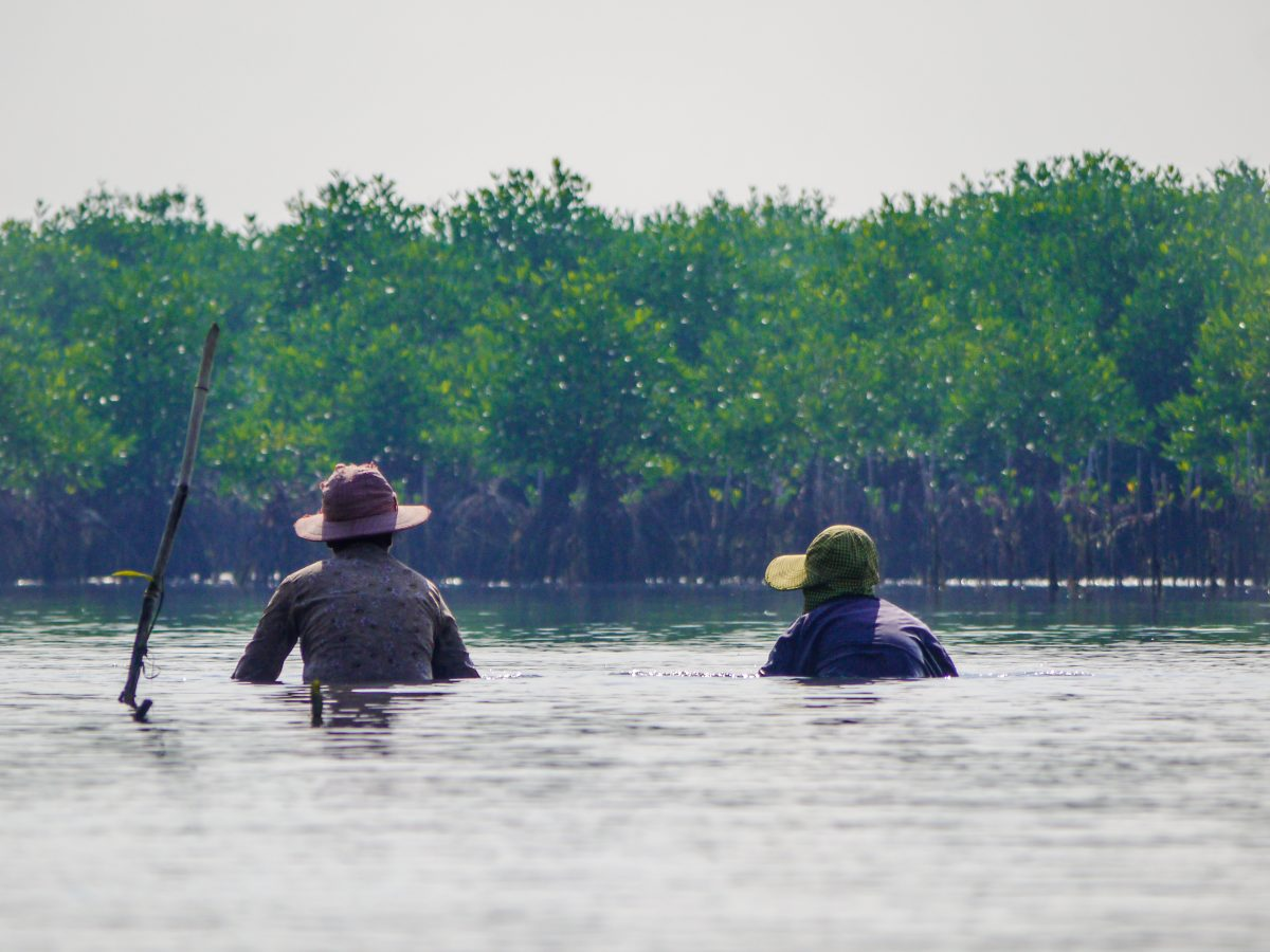 Cambodia Mangrove Conservation Volunteer project
