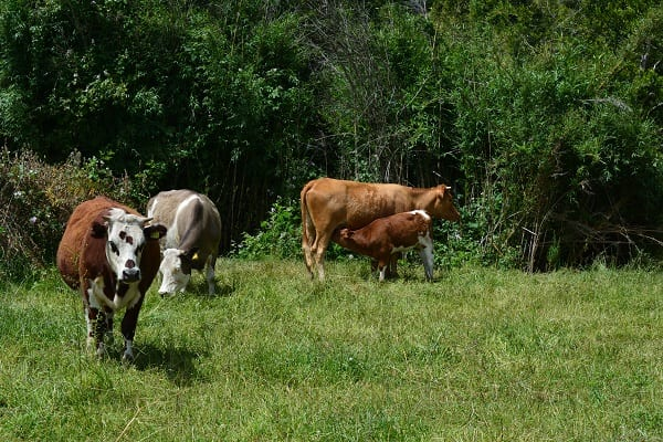Farming Experience Coihueco